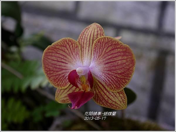 2013-05-蝴蝶蘭1
