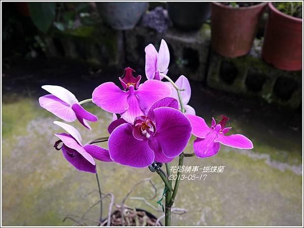 2013-05-蝴蝶蘭10