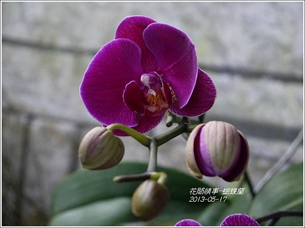 2013-05-蝴蝶蘭15