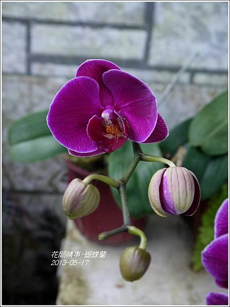 2013-05-蝴蝶蘭16