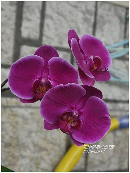 2013-05-蝴蝶蘭17