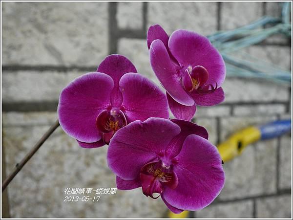 2013-05-蝴蝶蘭18