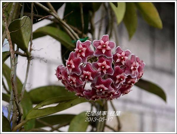 2013-05-毬蘭6