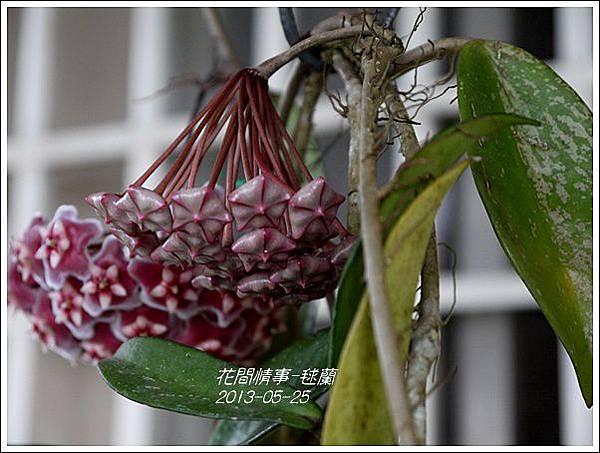 2013-05-毬蘭13