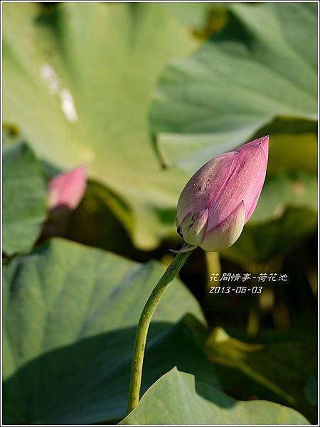 2013-06-荷花池15