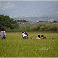 2013-06-三民風情22