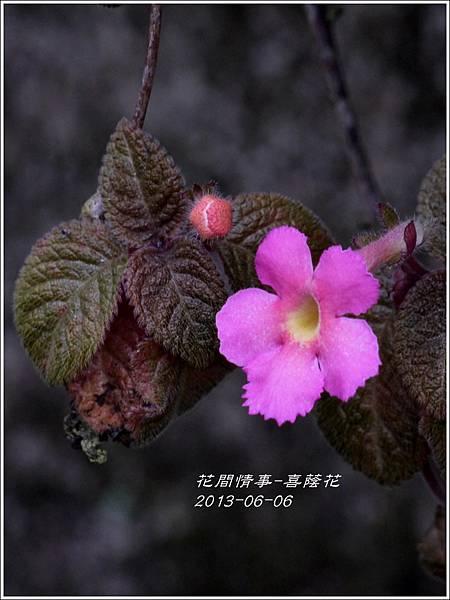 2013-06-喜蔭花7