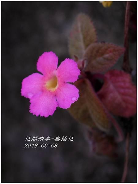 2013-06-喜蔭花8