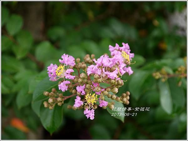 2013-07-紫薇花17.jpg