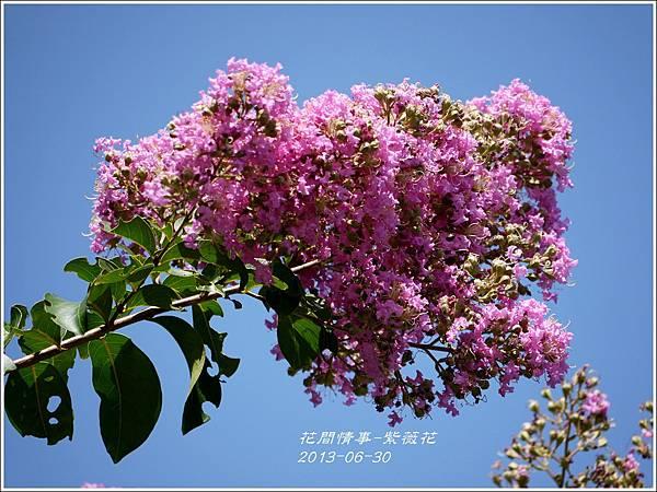 2013-07-紫薇花1.jpg