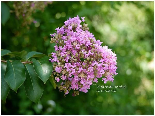 2013-07-紫薇花2.jpg
