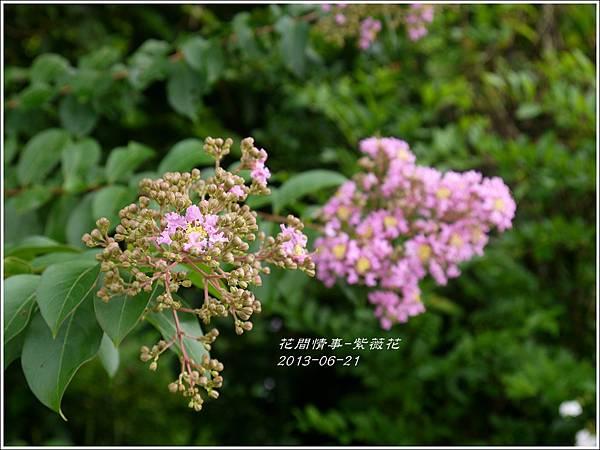 2013-07-紫薇花3.jpg
