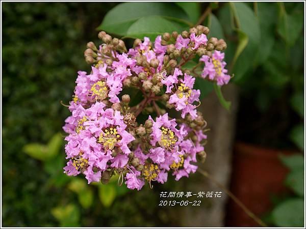 2013-07-紫薇花5.jpg