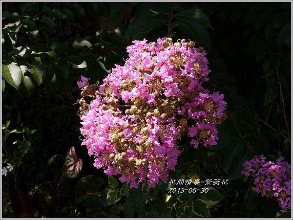 2013-07-紫薇花8.jpg