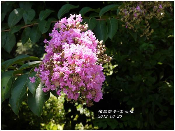 2013-07-紫薇花7.jpg