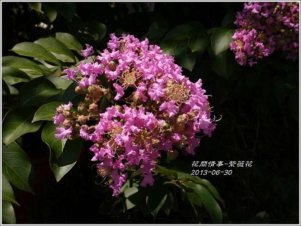 2013-07-紫薇花9.jpg