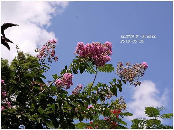 2013-07-紫薇花10.jpg