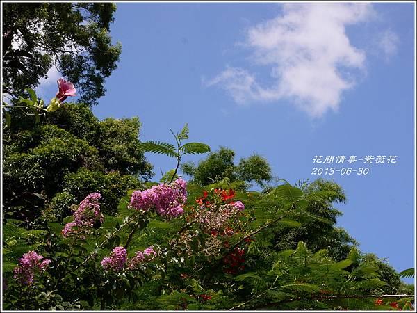 2013-07-紫薇花11.jpg