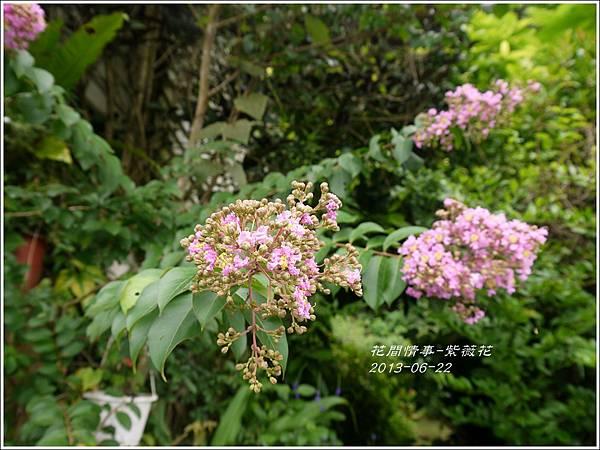 2013-07-紫薇花16.jpg
