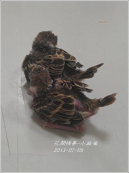 2012-07-小麻雀9.jpg