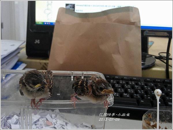 2012-07-小麻雀10.jpg