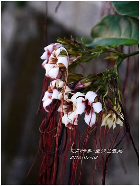 2013-07-垂絲金龍藤6.jpg
