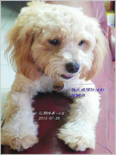 2013-07-26-小Q6.jpg