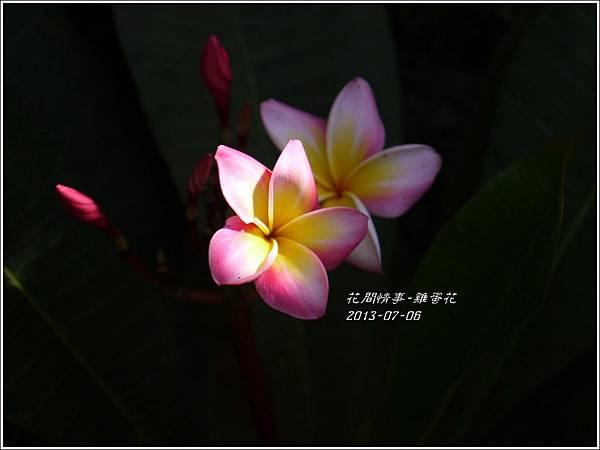 2013-07-雞蛋花1.jpg
