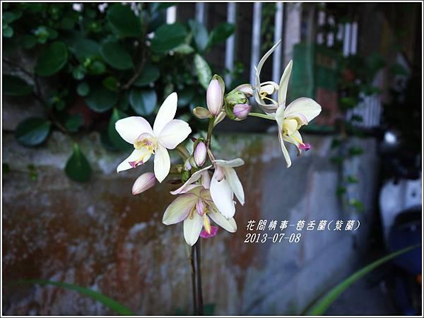 2013-08-苞舌蘭(紫蘭)3.jpg