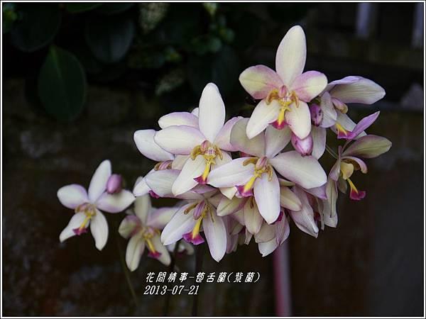 2013-08-苞舌蘭(紫蘭)10.jpg