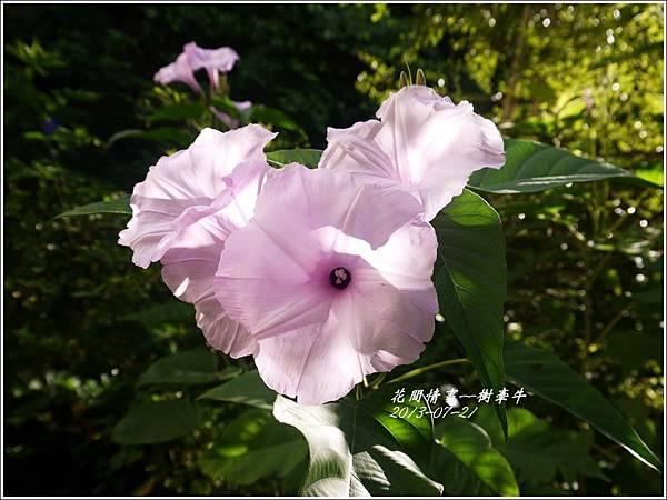 2013-08-樹牽牛4.jpg