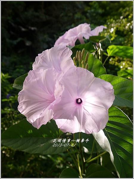 2013-08-樹牽牛6.jpg