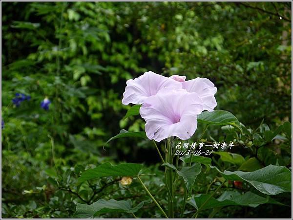 2013-08-樹牽牛10.jpg