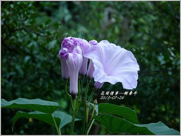 2013-08-樹牽牛11.jpg