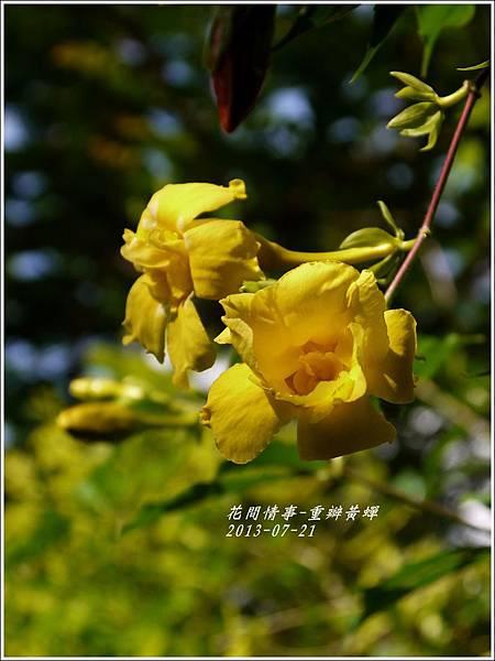 2013-08-重瓣黃蟬6.jpg