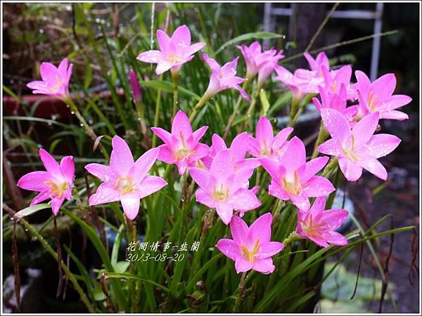 2013-08-韭蘭12.jpg