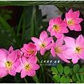 2013-08-韭蘭16.jpg