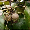 2013-08-赤柯山金針花情24.jpg