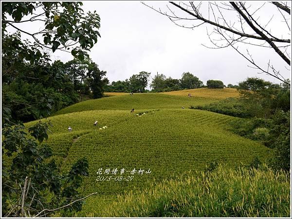 2013-08-赤柯山金針花情26.jpg