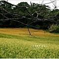 2013-08-赤柯山金針花情27.jpg
