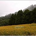 2013-08-赤柯山金針花情53.jpg