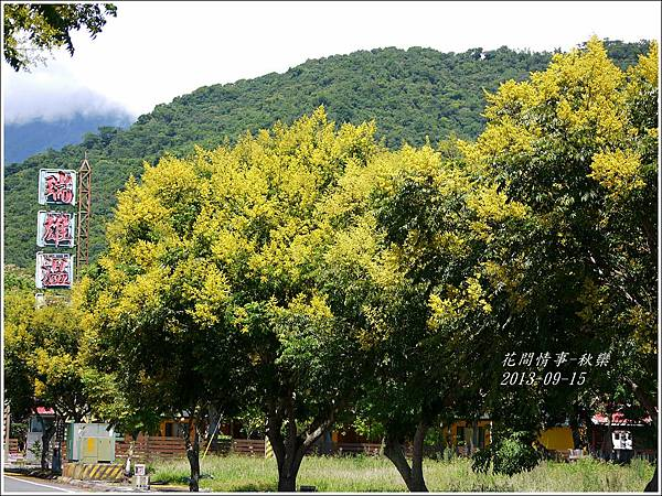 2013-09-秋欒4.jpg