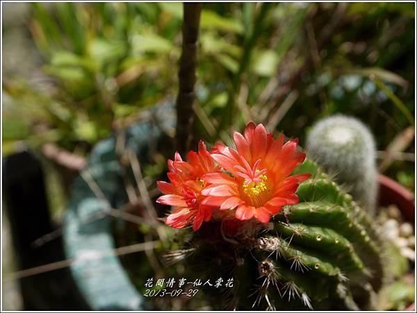 2013-09-仙人掌花1.jpg