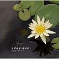 2013-10-蓮雨居3.jpg