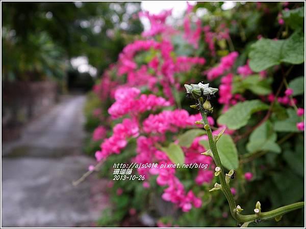 2013-10-珊瑚藤8.jpg