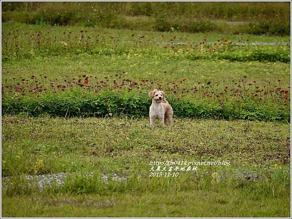2013-11-大農大富平地森林15.jpg