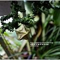 2013-11-蘿藦科(巨龍角)波斯地毯1.jpg