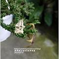 2013-11-蘿藦科(巨龍角)波斯地毯8.jpg