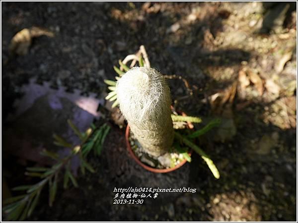 2013-11-仙人掌1.jpg