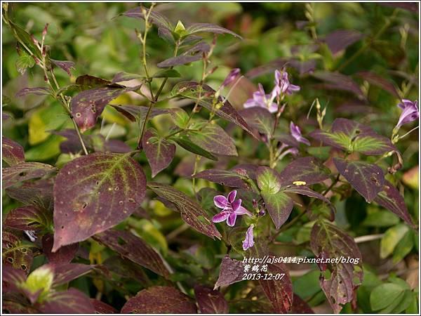 2013-12-紫鶴花1.jpg